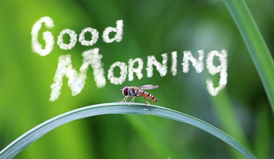Best Good Morning Wishes For Friends in Hindi, English   Best Morning Wishes