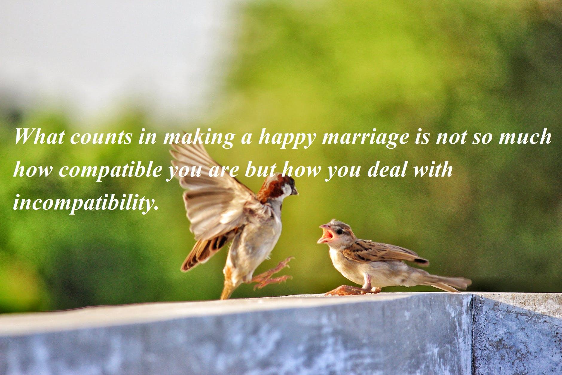 Happy Wife Happy Life Quotes